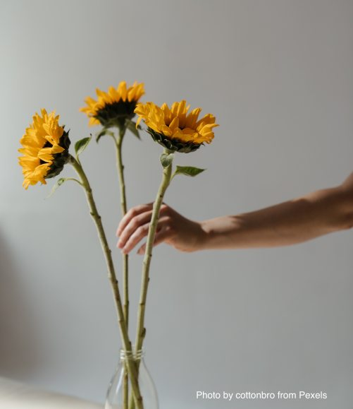 person-holding-yellow-sunflowers-4272629